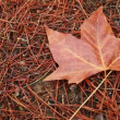 Stock Video: Hand collecting autumn brown dry leaves
