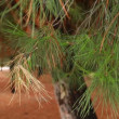 Green prickly branches of a fur-tree or pine -  