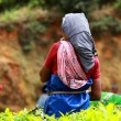 Woman picking tea leaves in a tea plantation, Munnar is best known as India — Stock Photo