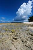 Düşük tide ve mavi gökyüzü ve mercan sahilde beyaz bulutlar. andaman adaları. — Stok fotoğraf
