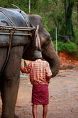 Man and his elephant. — Stock Photo