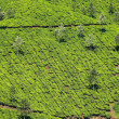 Landscape of green tea plantations. Munnar, Kerala, India — Stock Photo