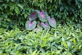 Tropical plant — Stock Photo