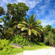 Green palm tree over blue sky in Andamans Island, India. — Foto Stock