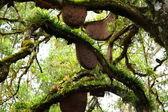Beehive hänger över ett träd — Stockfoto