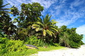 Green palm tree over blue sky in Andamans Island, India. — Stock Photo