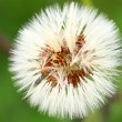 Close-up of dandelion seed head — Stock Photo #15698079