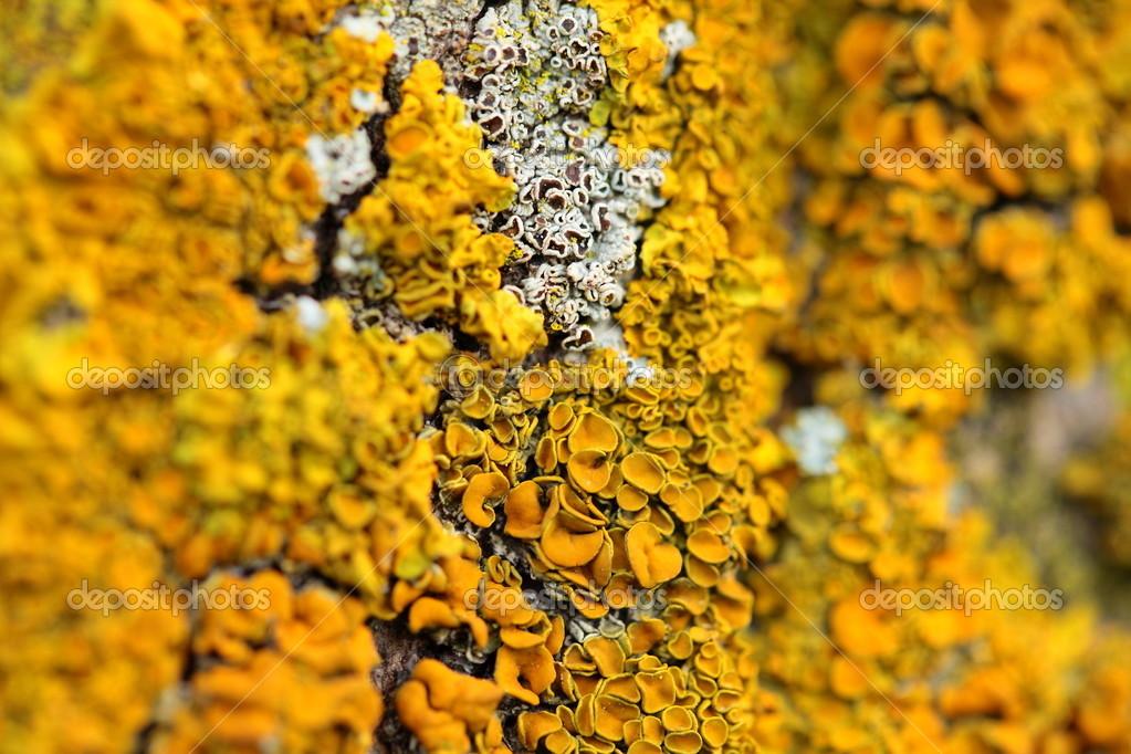 gros plan dun champignon jaune sur l corce des arbres photographie m prusaczyk 15698175. Black Bedroom Furniture Sets. Home Design Ideas