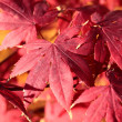 Magic autumn maple leaves — Stock Photo