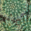 Close up of globe shaped cactus with long thorns — Stok fotoğraf