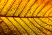 Close up of leaf texture — Stock Photo