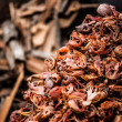 Traditional spices and dry fruits in local bazaar in India. — Stockfoto #18286243