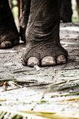 Olifant close-up — Stockfoto