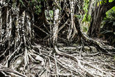 Angkor wat komplex in seam reap — Stockfoto