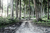 インドでは古くからある森林 — ストック写真