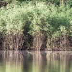 ������, ������: Amazon river in morning