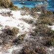 Scenic view over one of the beaches of Rottnest island  — Stock Photo