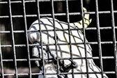 Beyaz papağan — Stok fotoğraf