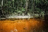 Um rio e belas árvores em uma floresta tropical — Foto Stock