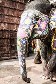 India, Rajasthan, Jaipur, the Amber Fort, elephant driver — Stock Photo