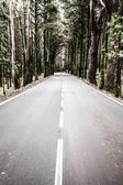 öffnen sie straße auf teneriffa. kurvenreiche bergstrasse in die wunderschöne landschaft auf teneriffa zeigen die vulkan-tiede. — Stockfoto
