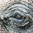 Elephant close up with beautiful orange eye and long lashes, South Africa - Stock Photo