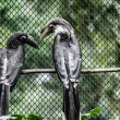 Wreathed Hornbill stand on branch — Stockfoto #18346739