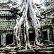 Temples in  Angkor, near Siem Reap, Cambodia — Stock Photo