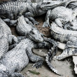 Flesh water crocodile in Thailand — Stockfoto #18362745