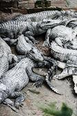 плоть крокодил воды в таиланде — Стоковое фото