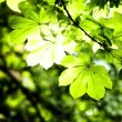 Stock Video: Beautiful green leaves and bright sun over blurred background