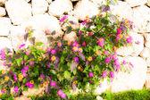 Tuğla duvar çiçek — Stok fotoğraf