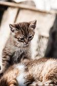 Parkta küçük kediler — Stok fotoğraf