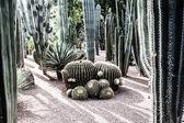 Bahçe majorelle marakeş, fas, afrika — Stok fotoğraf