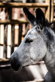 Head of a donkey in zoo — Stock Photo
