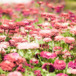 Pretty manicured flower garden — Stock Photo #18751439