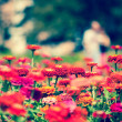 Pretty manicured flower garden — Stock Photo #18751455