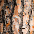 Wood bark as perfect background — Foto de Stock