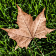 Autumn leaf in macro closeup — Foto Stock