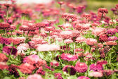 Pretty manicured flower garden — Stock Photo