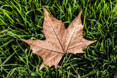 Autumn leaf in macro closeup — Stock Photo