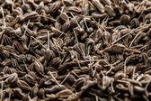 Hierbas secas en macro — Foto de Stock