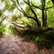 Rainforest in Garajonay National Park, La Gomera, Canary islands — Stock Photo