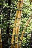 Asiatischen bambuswaldes mit morgensonnenlicht. — Stockfoto