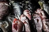 Balık pazarı içinde hindistan — Stok fotoğraf