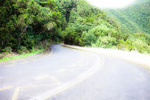 Schöne Straße in Wald auf Teneriffa — Stockfoto