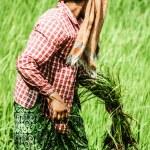Rural woman working in rice plantation, Myanmar — Stock Photo #19034311