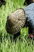 Mujer rural que trabaja en la plantación de arroz, myanmar — Foto de Stock