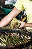 Woman making tabacco — Stock Photo