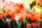 Colorful Dutch wooden souvenir tulips for sale at a market — Stock Photo